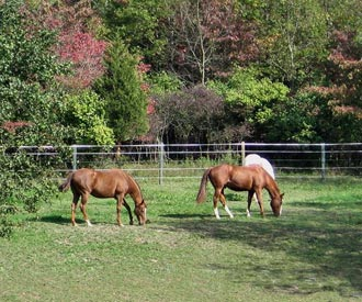 Horse Boarding in Dutchess County